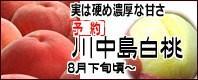 川中島白桃 長野県産桃