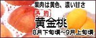 黄金桃 長野県産桃