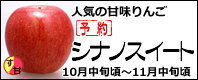 シナノスイート 長野県産りんご