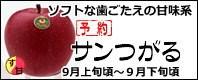 サンつがる 長野県産りんご