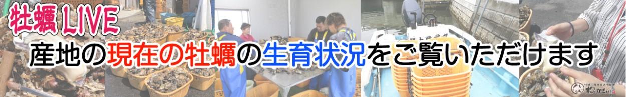 牡蠣の最新画像をご覧ください(*・ω・*)