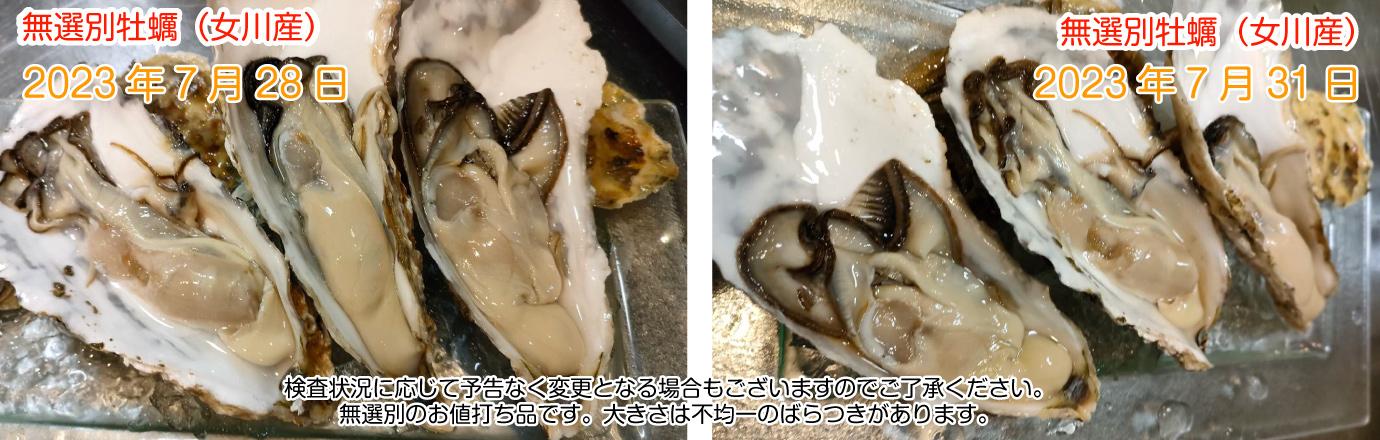 宮城県産牡蠣の最新画像