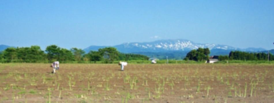 松ヶ岡農場