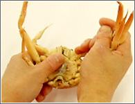 (3)甲羅の中央を押さえながら、片側の全ての指を持って上に折り曲げる。