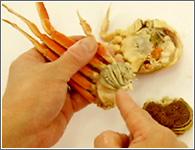 (5)指の根元にみの(かぶの上に付 いているひだ)が付いています。