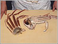 (4)もう片方も甲羅を手で押さえて、同じ要領で甲羅と足を分離する。