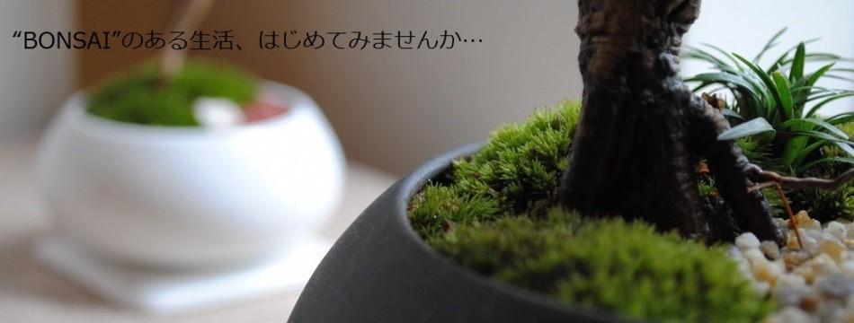 インテリア盆栽工房BonCyu