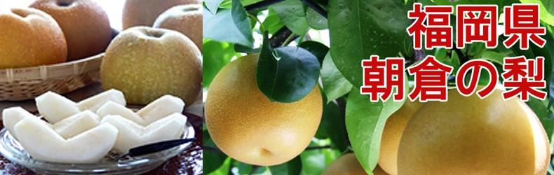 福岡県産・朝倉の梨