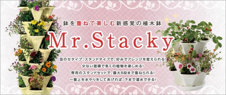 Mr.Stacky