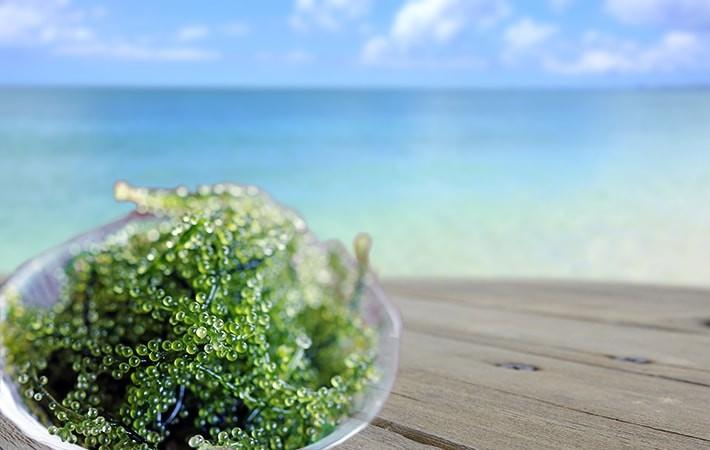 海ぶどうのイメージ