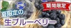 岩手県産の大玉の生ブルーベリー