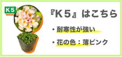 クラピア K5
