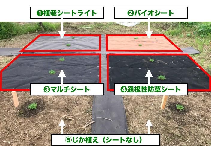 クラピア植栽シートを使った場合の成長前