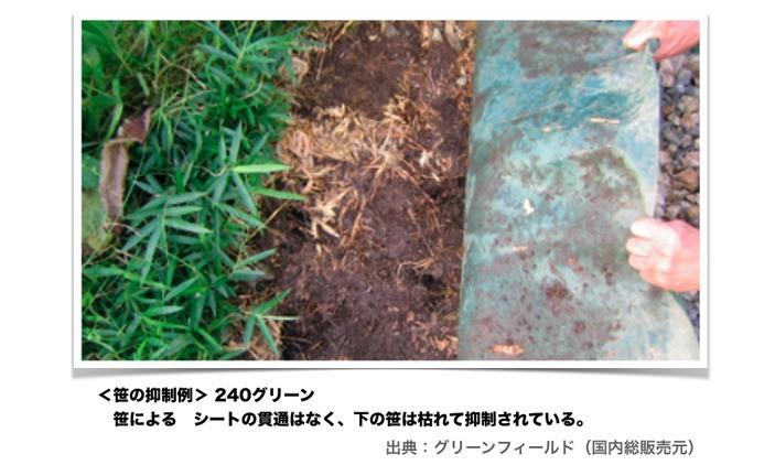 ザバーンの使用例 笹の貫通を防ぐ効果