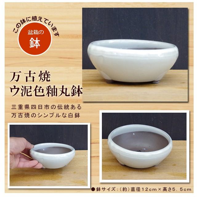 信楽焼き鉢
