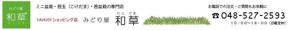 苔玉・盆栽・苔盆栽の専門店『みどり屋 和草(にこぐさ)』