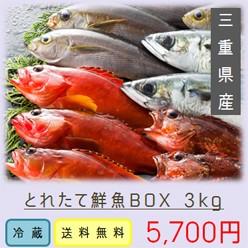 鮮魚BOX3kg