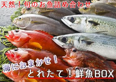 鮮魚box2kg