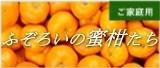 三ケ日みかん早生ふぞろいの蜜柑たち