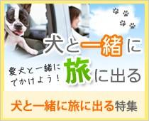 犬と一緒に旅に出る特集