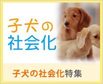 子犬の社会化特集