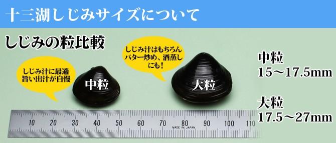 しじみ貝サイズ