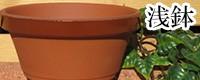 浅鉢 植木鉢/おしゃれ/陶器/大型/人気/白/ピンク/グリーン/ブルー