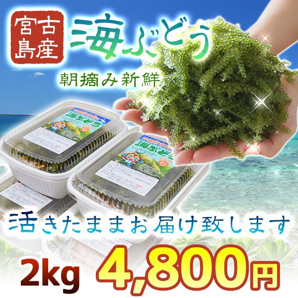 海ぶどう2kg