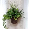 光触媒観葉植物 壁掛ナチュラルグラス width=