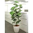 光触媒人工観葉植物 カポック1.8m
