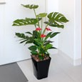 光触媒観葉植物 モンステラ&アンスリューム95cm