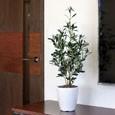 光触媒観葉植物 オリーブ90cm