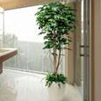 光触媒人工観葉植物 フィカスベンジャミン1.8m植栽付