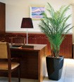 光触媒人工観葉植物(インテリアグリーン)アーバンアレカパーム1.7m