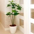 光触媒人工観葉植物(インテリアグリーン)ブランチウンベラータ1.25m