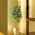 光触媒人工観葉植物 オリーブ1.6m
