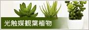 光の楽園 光触媒観葉植物(人工植物)