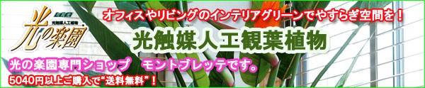 光触媒人工観葉植物、人工観葉植物、光触媒観葉植物、インテリアグリーン