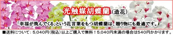 贈って喜ばれる、光触媒胡蝶蘭、造花の商品はこちら