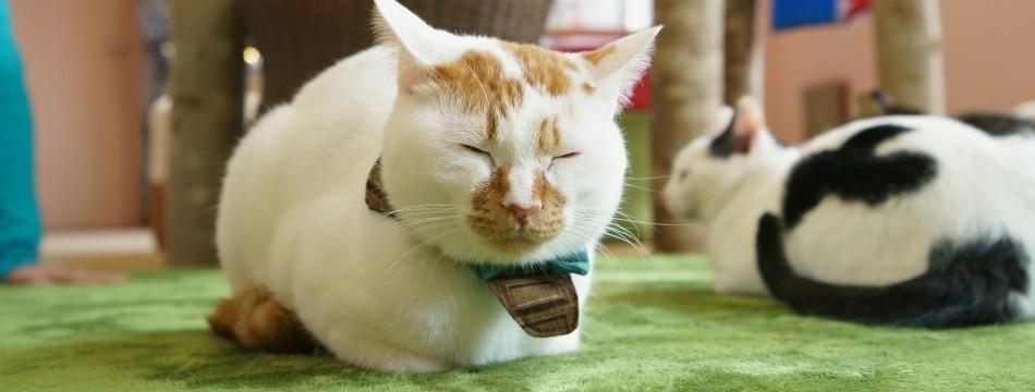 保護猫カフェ もりねこ