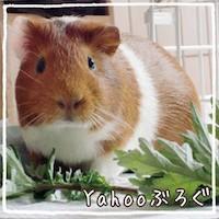 Yahooブログバナー