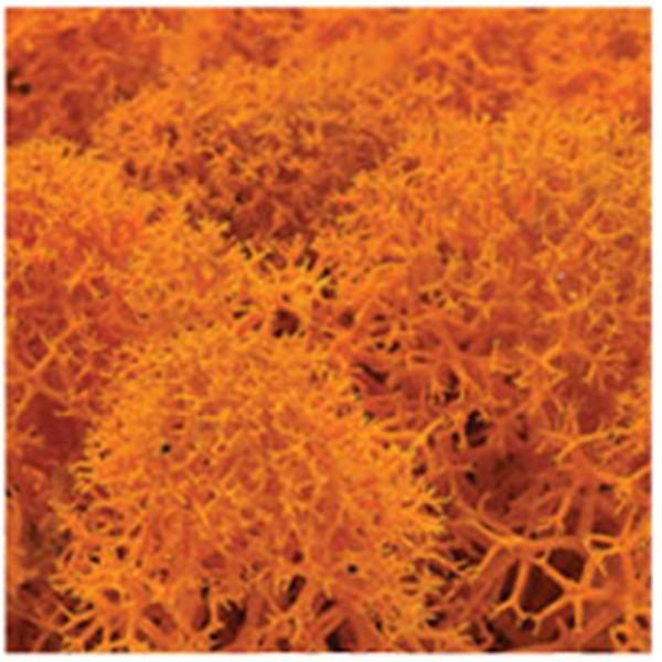 DIY moss500 スカンディアモス 親子 エコ インテリア 小物 緑化 ディスプレイ インテリア 自然素材 手作りキット グリーン ロハス|mosscreo|19