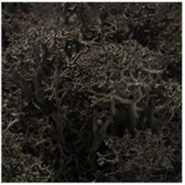 DIY moss500 スカンディアモス 親子 エコ インテリア 小物 緑化 ディスプレイ インテリア 自然素材 手作りキット グリーン ロハス|mosscreo|26