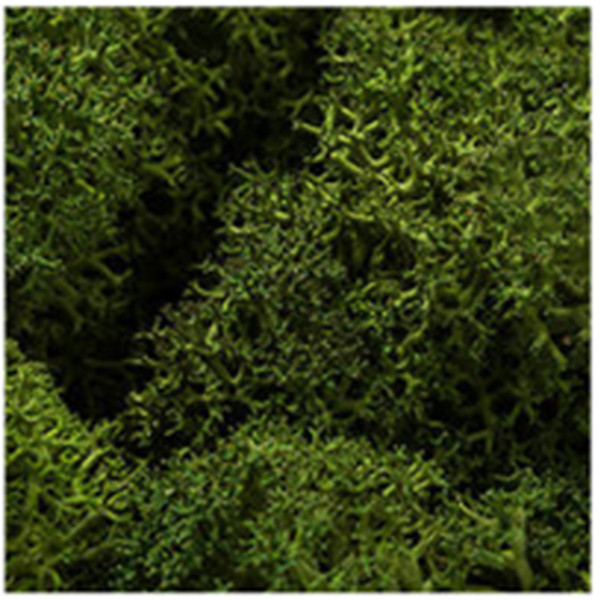 DIY moss500 スカンディアモス 親子 エコ インテリア 小物 緑化 ディスプレイ インテリア 自然素材 手作りキット グリーン ロハス|mosscreo|07