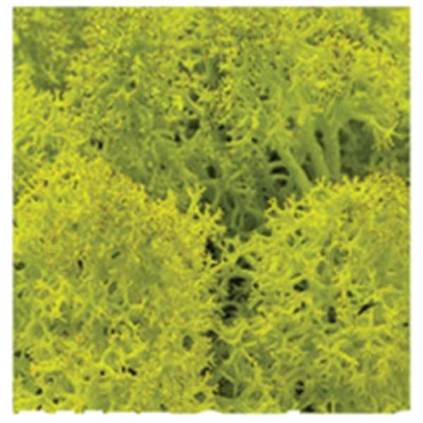 DIY moss500 スカンディアモス 親子 エコ インテリア 小物 緑化 ディスプレイ インテリア 自然素材 手作りキット グリーン ロハス|mosscreo|10