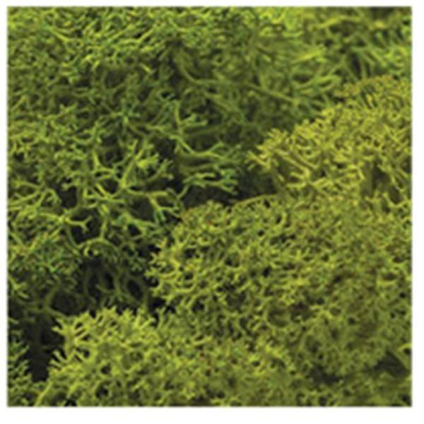 DIY moss500 スカンディアモス 親子 エコ インテリア 小物 緑化 ディスプレイ インテリア 自然素材 手作りキット グリーン ロハス|mosscreo|08