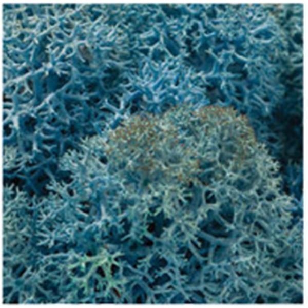 DIY moss500 スカンディアモス 親子 エコ インテリア 小物 緑化 ディスプレイ インテリア 自然素材 手作りキット グリーン ロハス|mosscreo|13