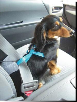 愛犬用シートベルトPowerDOG
