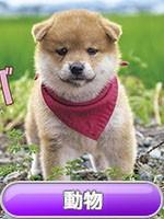 動物 カレンダー