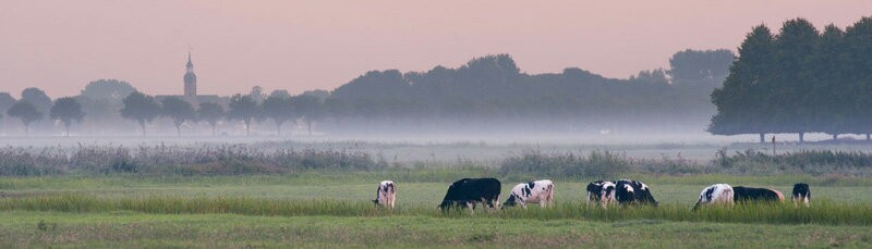 オーガニック農場 放牧牛